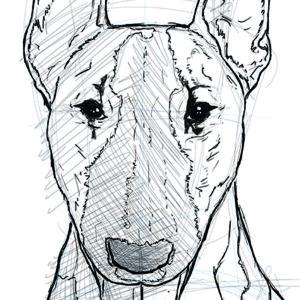 sketching. Bull Terrier